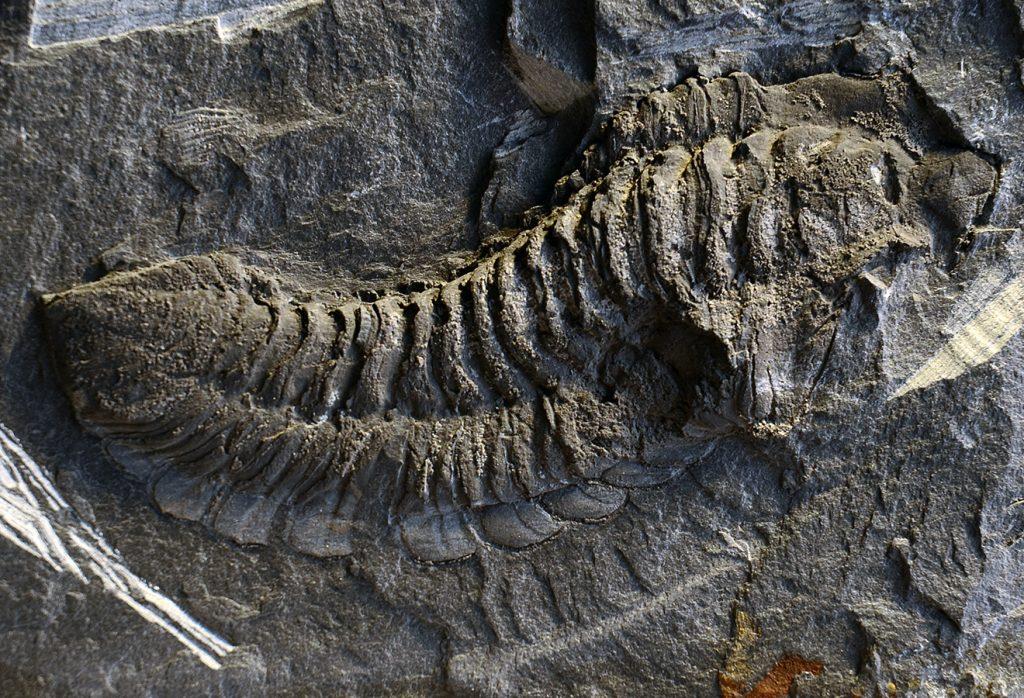 Fossils – Museu das Trilobites – Centro de Interpretação