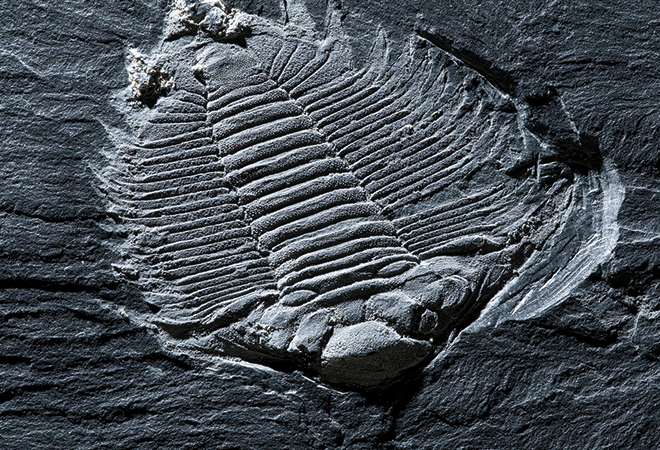 Trilobite mítica de Canelas