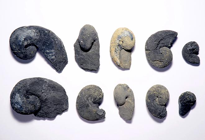 Gasterópodes