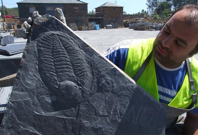 Descoberta de fóssil