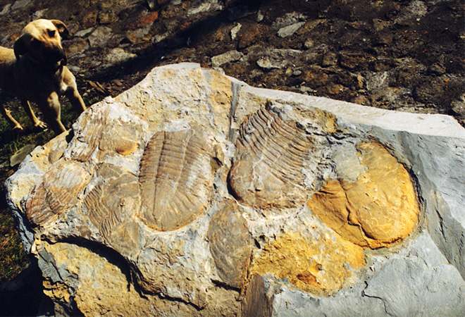 Os primeiros fósseis excepcionais